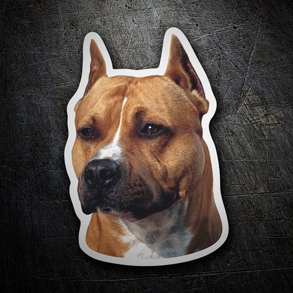 Car and Motorbike Stickers: American Staffordshire Terrier