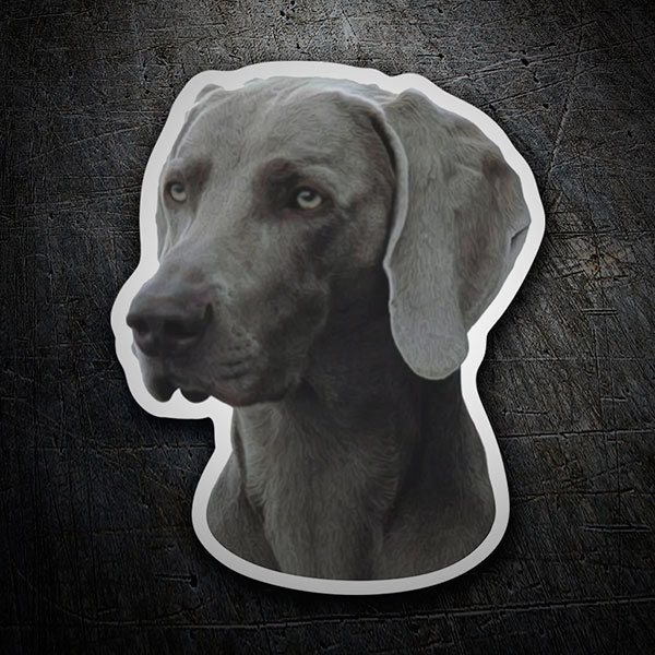 Car and Motorbike Stickers: Weimaraner