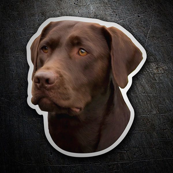 Car and Motorbike Stickers: Chocolate Labrador Retriever