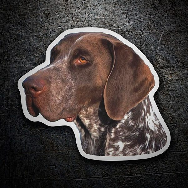 Car and Motorbike Stickers: German Shorthaired Pointer