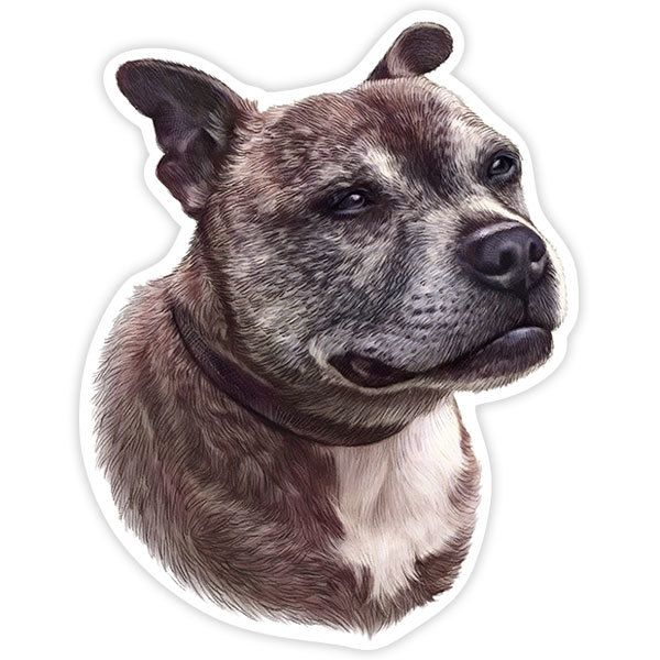 Car and Motorbike Stickers: Staffordshire Bull Terrier