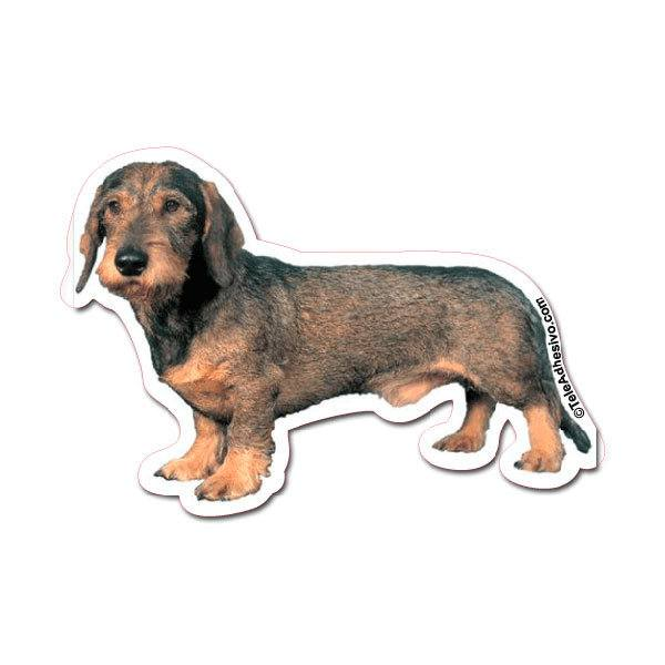 Car and Motorbike Stickers: Wirehaired Dachshund