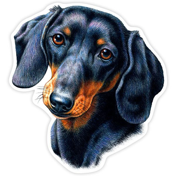 Car and Motorbike Stickers: Dachshund