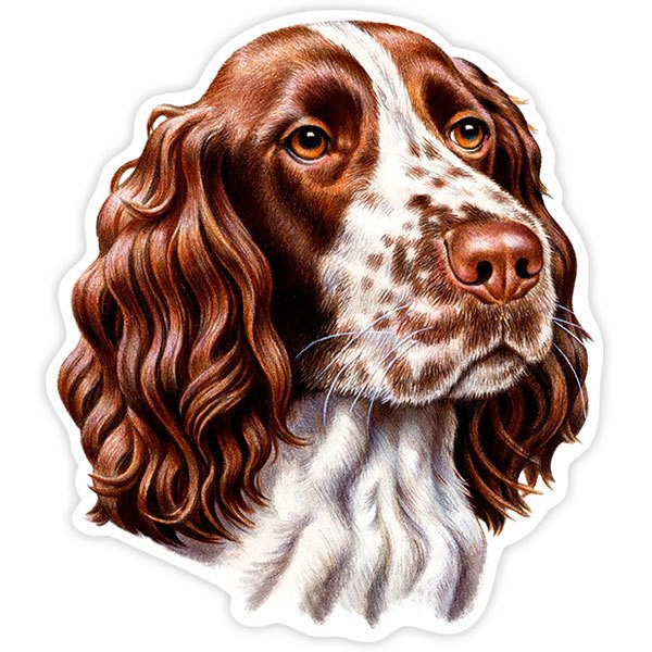 Car and Motorbike Stickers: English Springer Spaniel