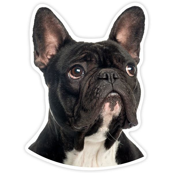 Car and Motorbike Stickers: French Bulldog