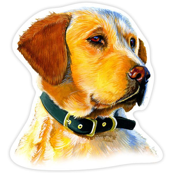 Car and Motorbike Stickers: Golden Retriever