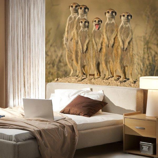 Wall Murals: Meerkats