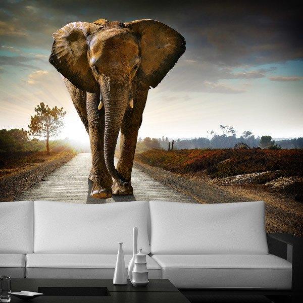 Wall Murals: elephant