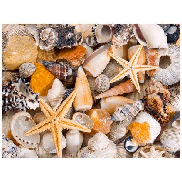 Wall Stickers: Sea specialties