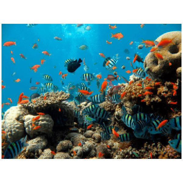 Wall Stickers: Bottom of the sea