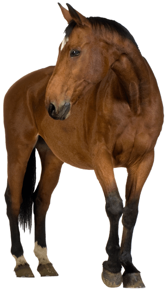 Wall Stickers: Brown horse