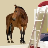 Wall Stickers: Brown horse 3