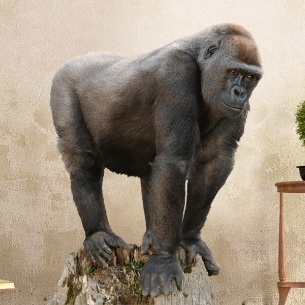 Wall Stickers: Gorilla