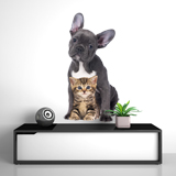 Wall Stickers: Adorable Puppies 3