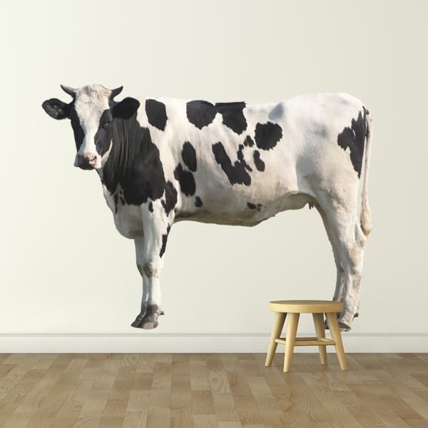 Wall Stickers: Holstein Cow