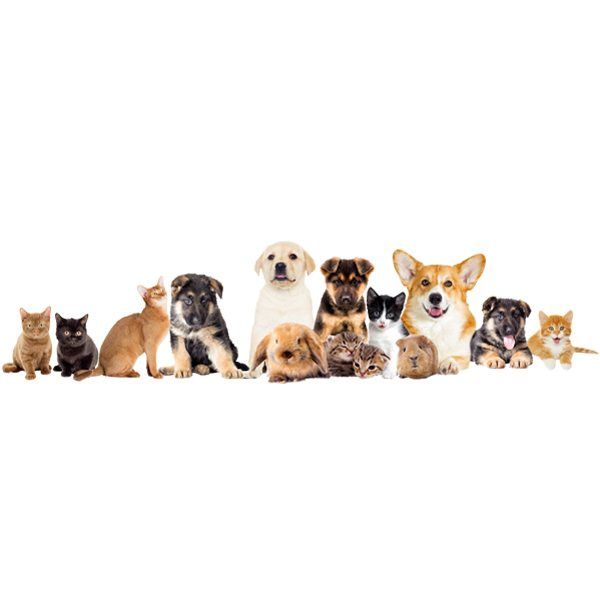 Wall Stickers: Pets