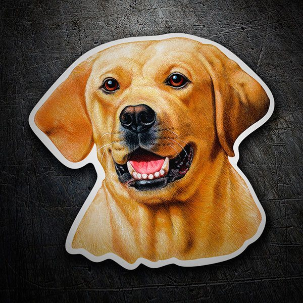 Car & Motorbike Stickers: Sticker Labrador Retriever yellow