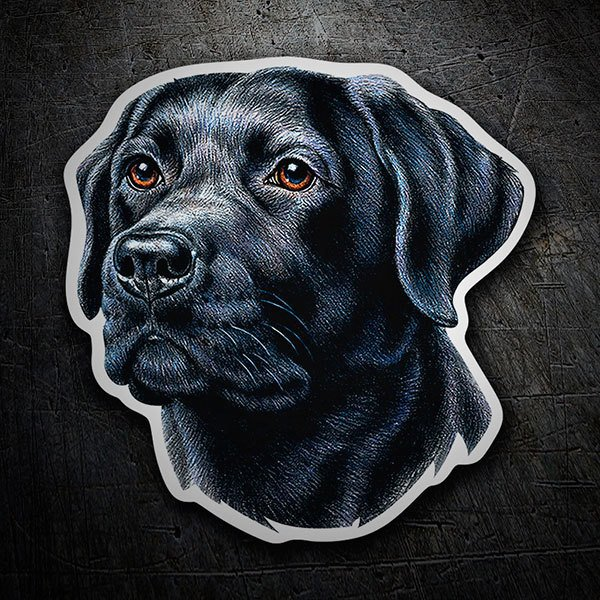 Car & Motorbike Stickers: Labrador retriever black