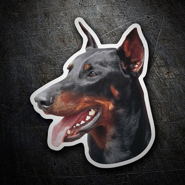 Car and Motorbike Stickers: Doberman Pinscher