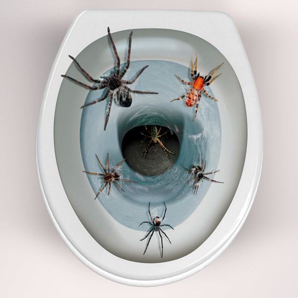 Wall Stickers: Spiders coming out of the toilet bowl