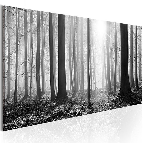 Other products: Black and white forest