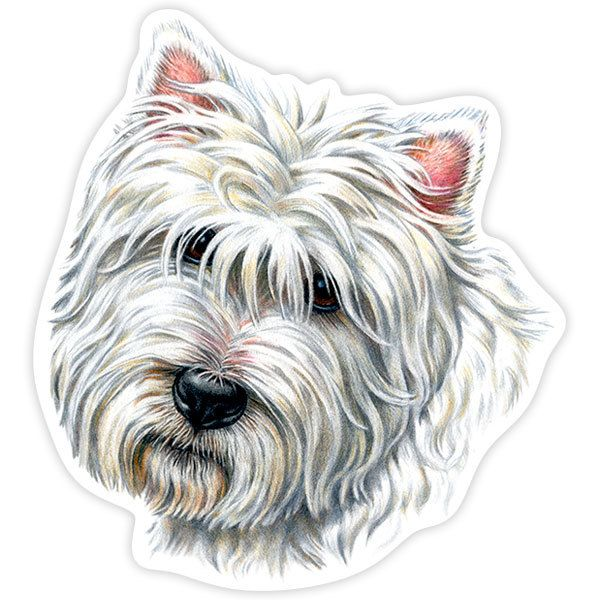 Car and Motorbike Stickers: West Highland Terrier