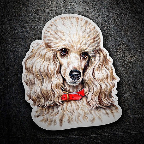 Car & Motorbike Stickers: Poodle