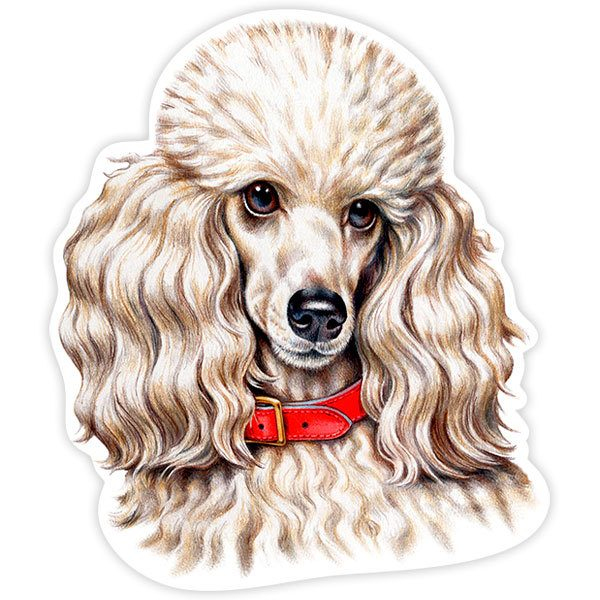 Car and Motorbike Stickers: White Miniature Poodle