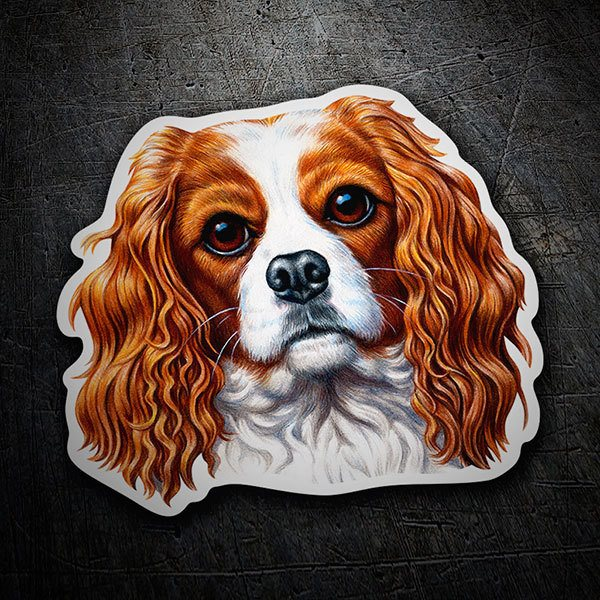 Car & Motorbike Stickers: Cavalier King Charles