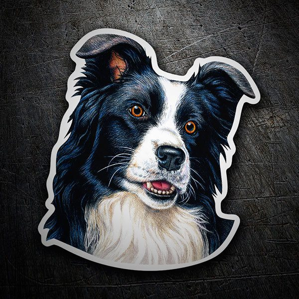 Car & Motorbike Stickers: Border Collie