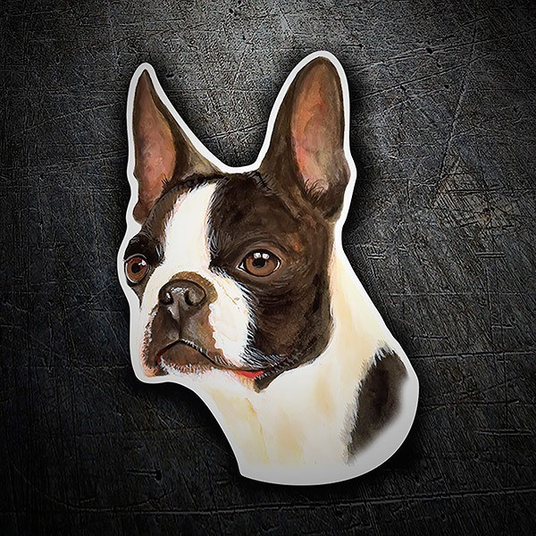 Car & Motorbike Stickers: Boston Terrier