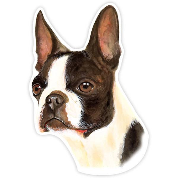 Car and Motorbike Stickers: Boston Terrier