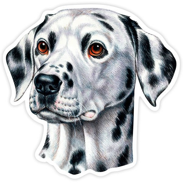 Car and Motorbike Stickers: Dalmatian