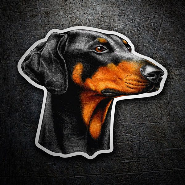 Car & Motorbike Stickers: Doberman