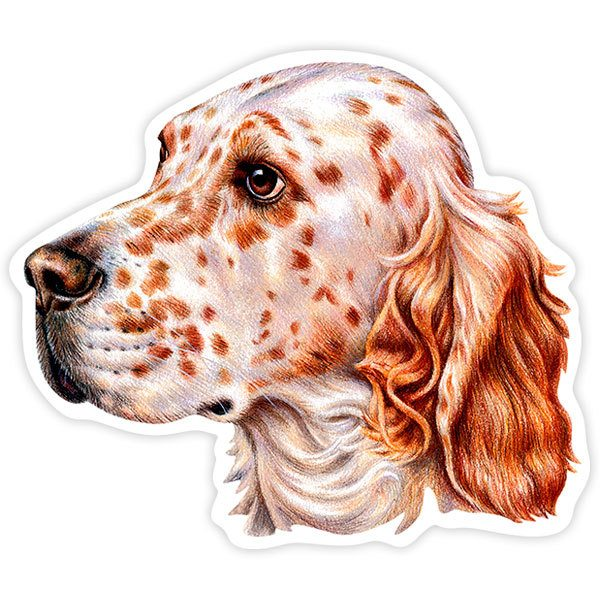 Car and Motorbike Stickers: English Setter