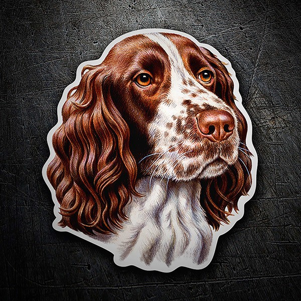 Car & Motorbike Stickers: English Springer Spaniel