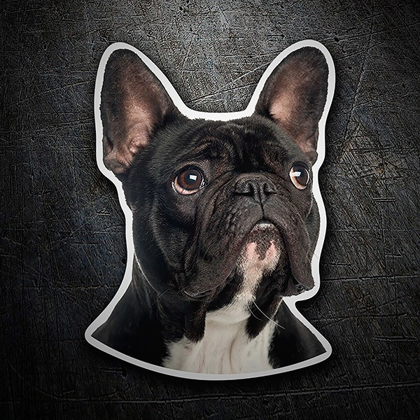 Car & Motorbike Stickers: French Bulldog