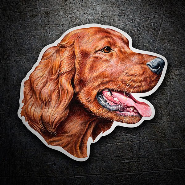 Car & Motorbike Stickers: Irish Setter