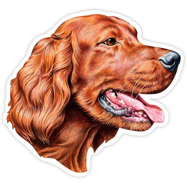 Car and Motorbike Stickers: Irish Setter