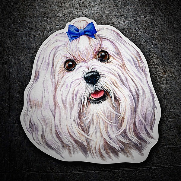 Car & Motorbike Stickers: Maltese bichon