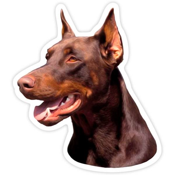 Car and Motorbike Stickers: Red Doberman Pinscher