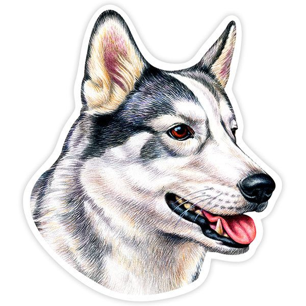 Car and Motorbike Stickers: Siberian Husky