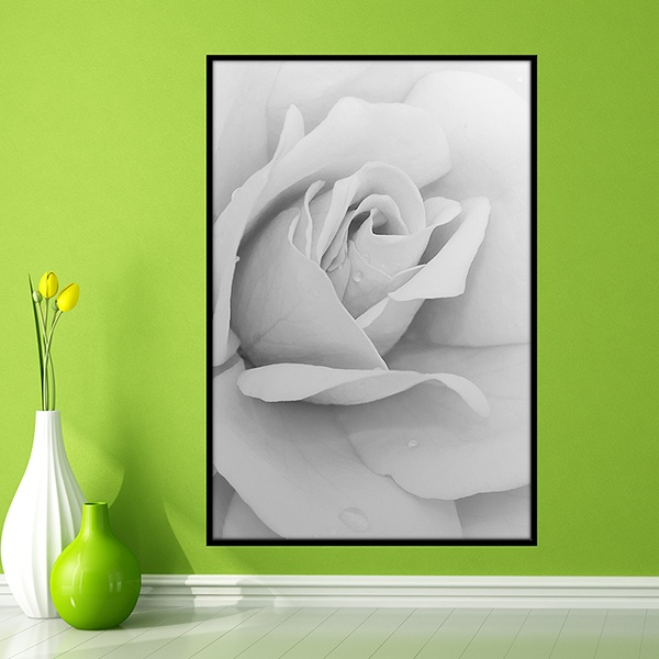 Wall Stickers: White Rose