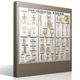 Wall Stickers: The skeletal system 4