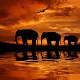 Wall Murals: Elephants migrating 3