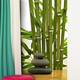 Wall Murals: Bamboo and stones 3