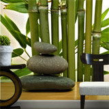 Wall Murals: Bamboo and stones 4