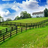Wall Murals: The farm 2