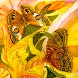 Wall Murals: Picture of Butterflies 2