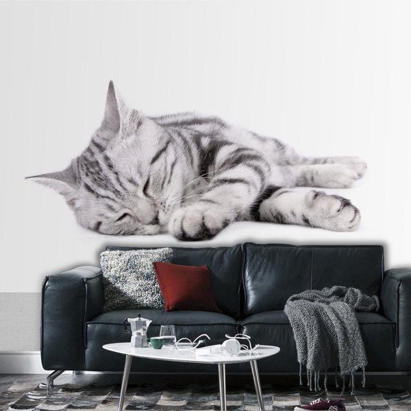 Wall Murals: Sleeping cat 0